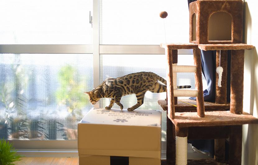 猫の環境エンリッチメント
